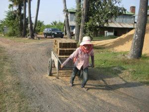 Cambogia 6 300x225 - Cambogia-6Cambogia 6 300x225 - Cambogia-6 - -