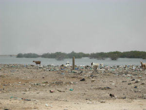 Senegal 5 300x225 - Senegal-5Senegal 5 300x225 - Senegal-5 - -